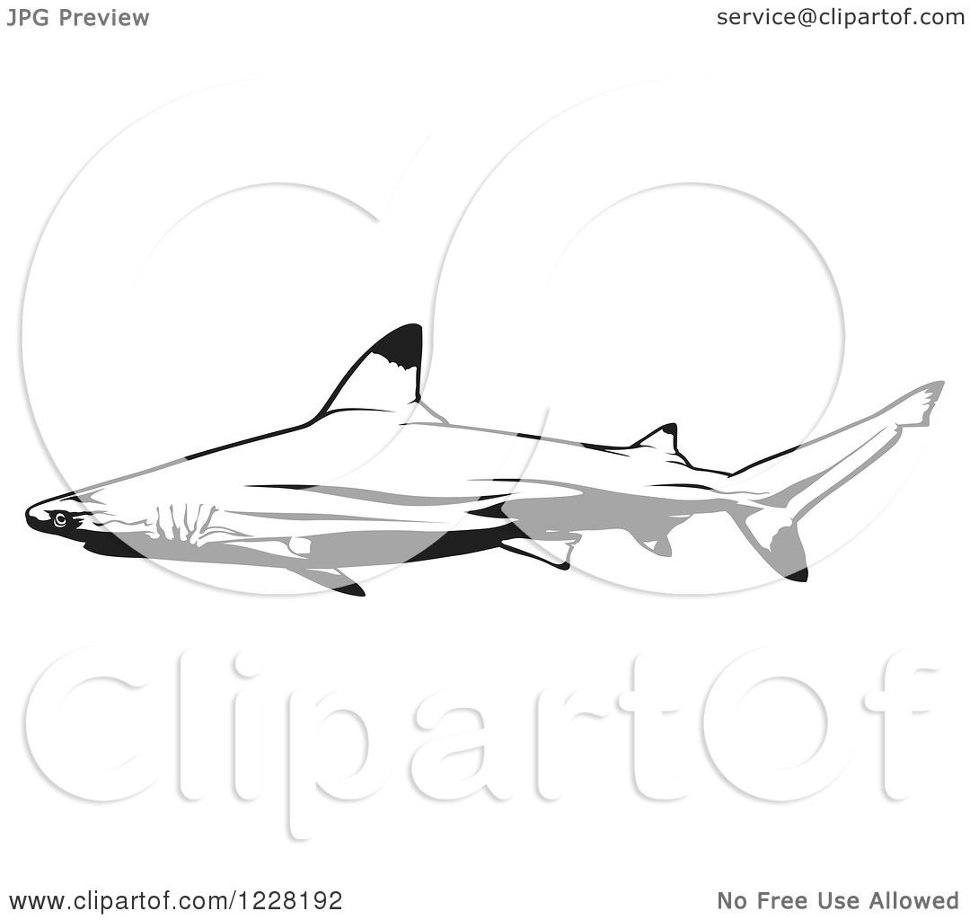 Clipart Of A Black And White Blacktip Reef Shark