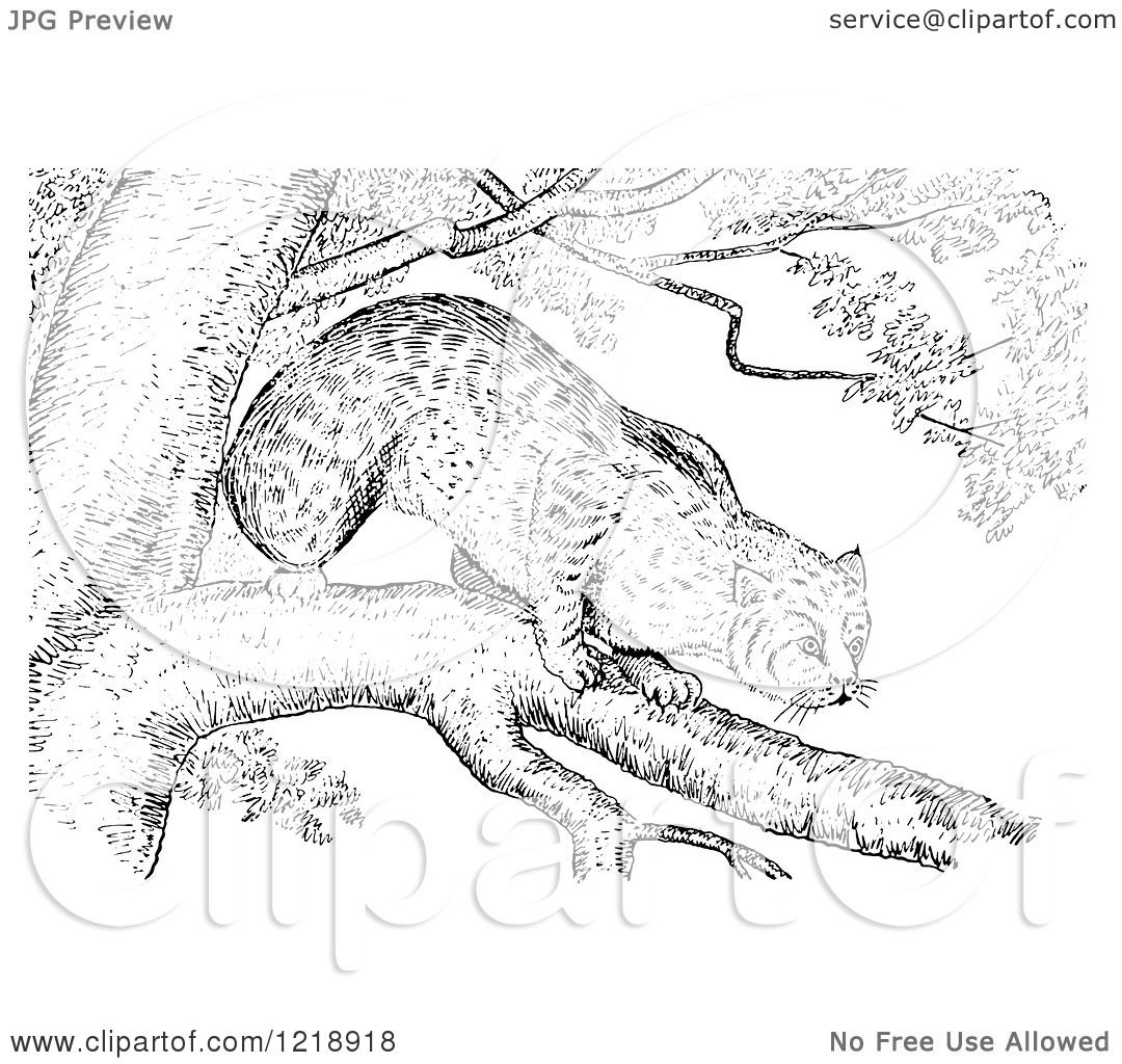 Clipart Of A Black And White Bobcat In A Tree