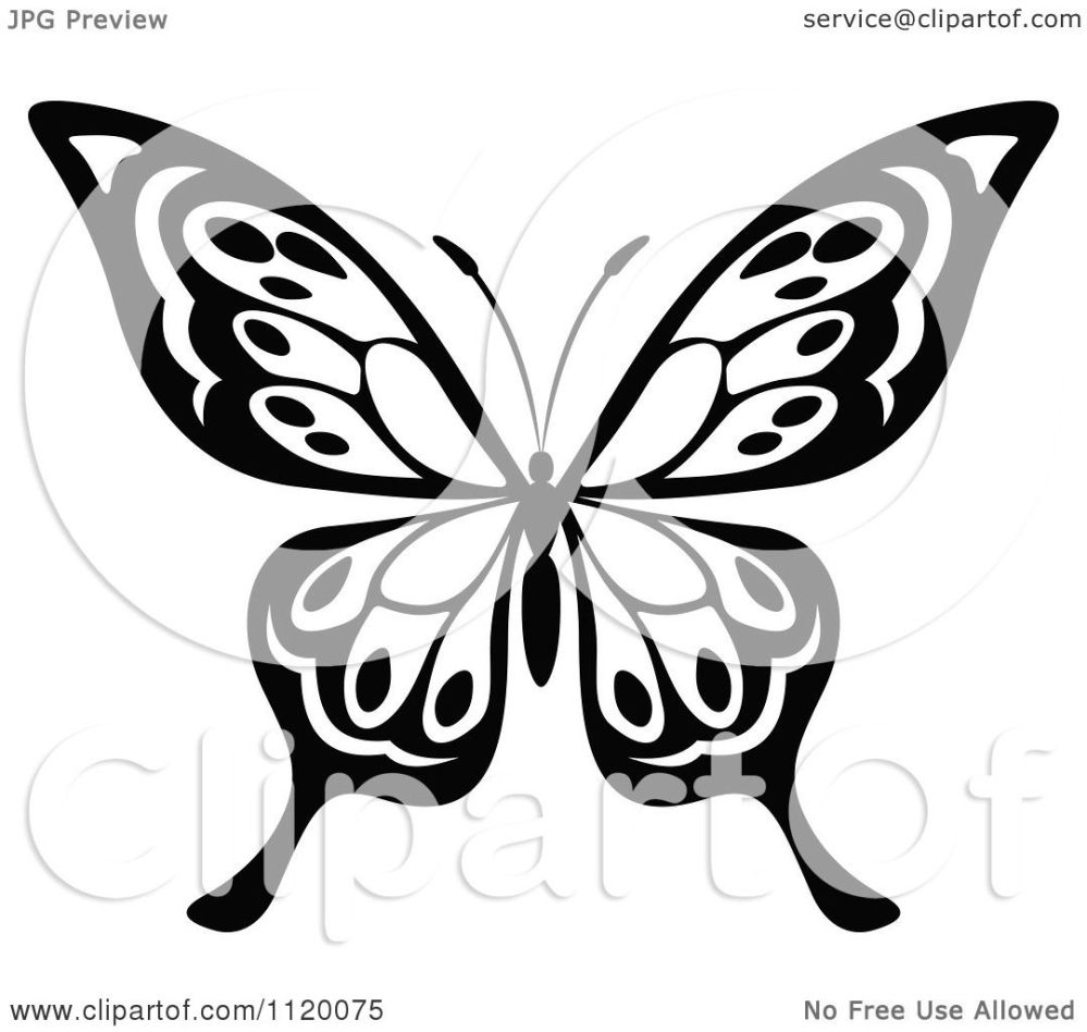 medium resolution of clipart of a black and white butterfly 16 royalty free vector illustration by vector tradition