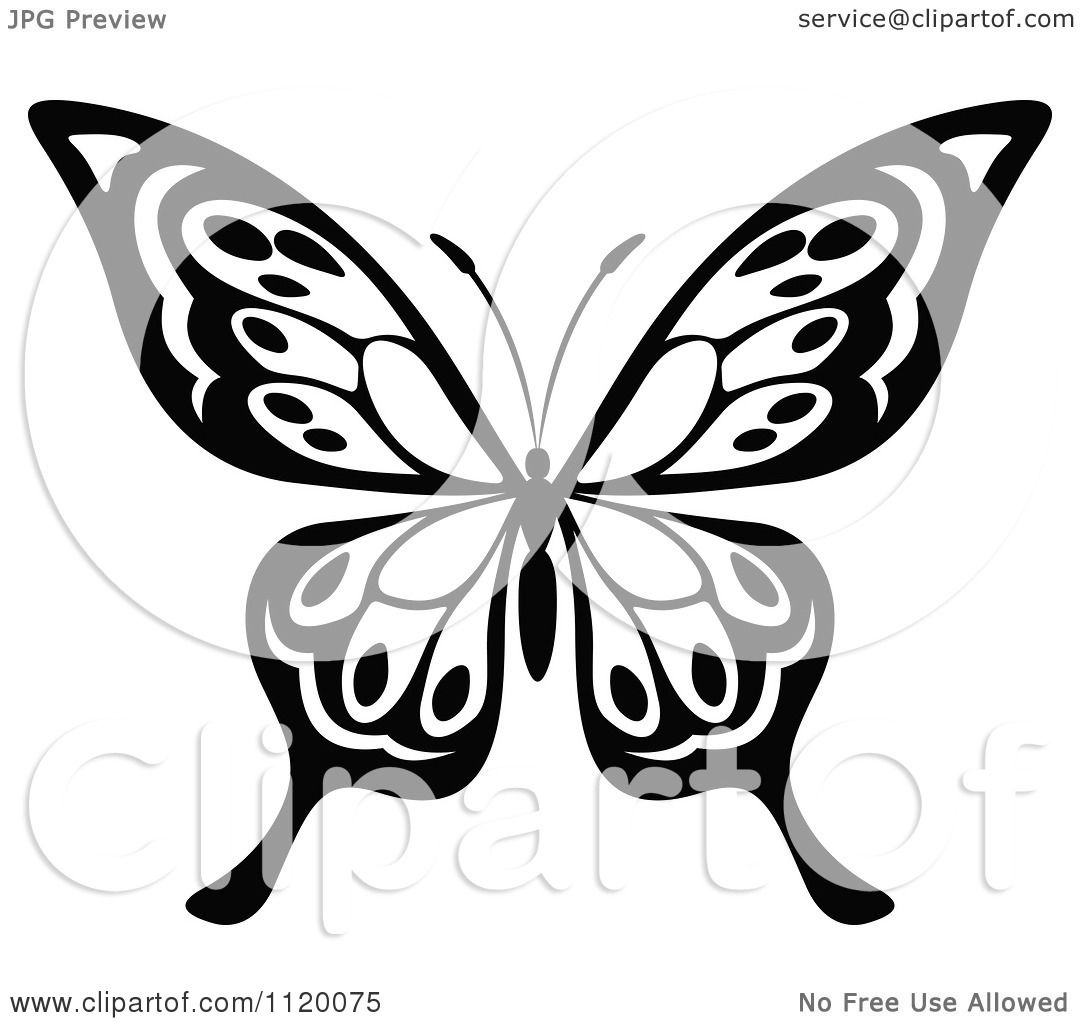 hight resolution of clipart of a black and white butterfly 16 royalty free vector illustration by vector tradition