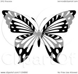 butterfly illustration clipart vector royalty copyright tradition sm without graphics background regarding notes
