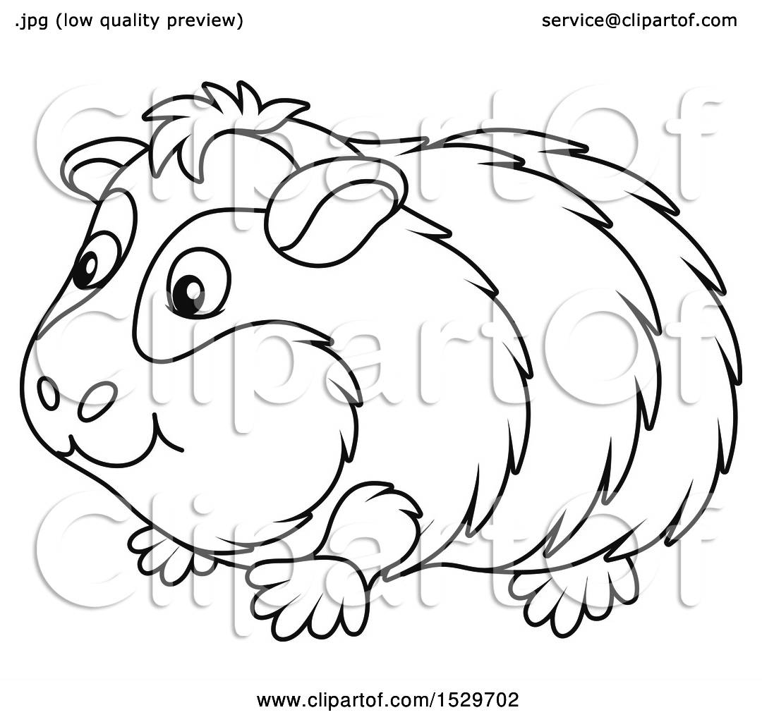 Clipart Of A Black And White Cute Guinea Pig