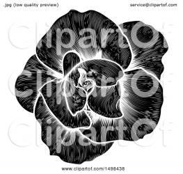 engraved rose flower illustration clipart royalty atstockillustration vector