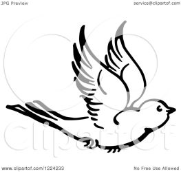 flying bird clipart vector picsburg resolution protected copyright