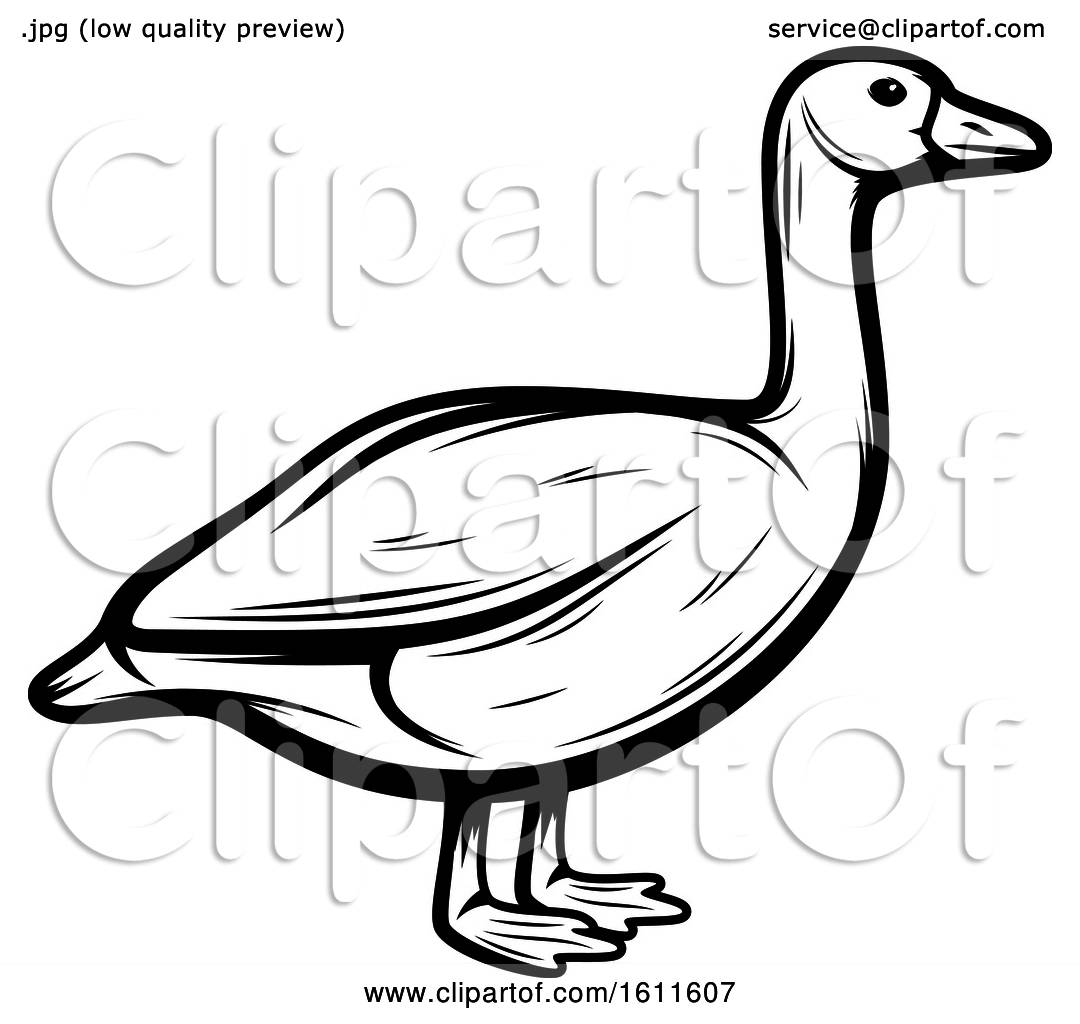 Clipart Of A Black And White Goose