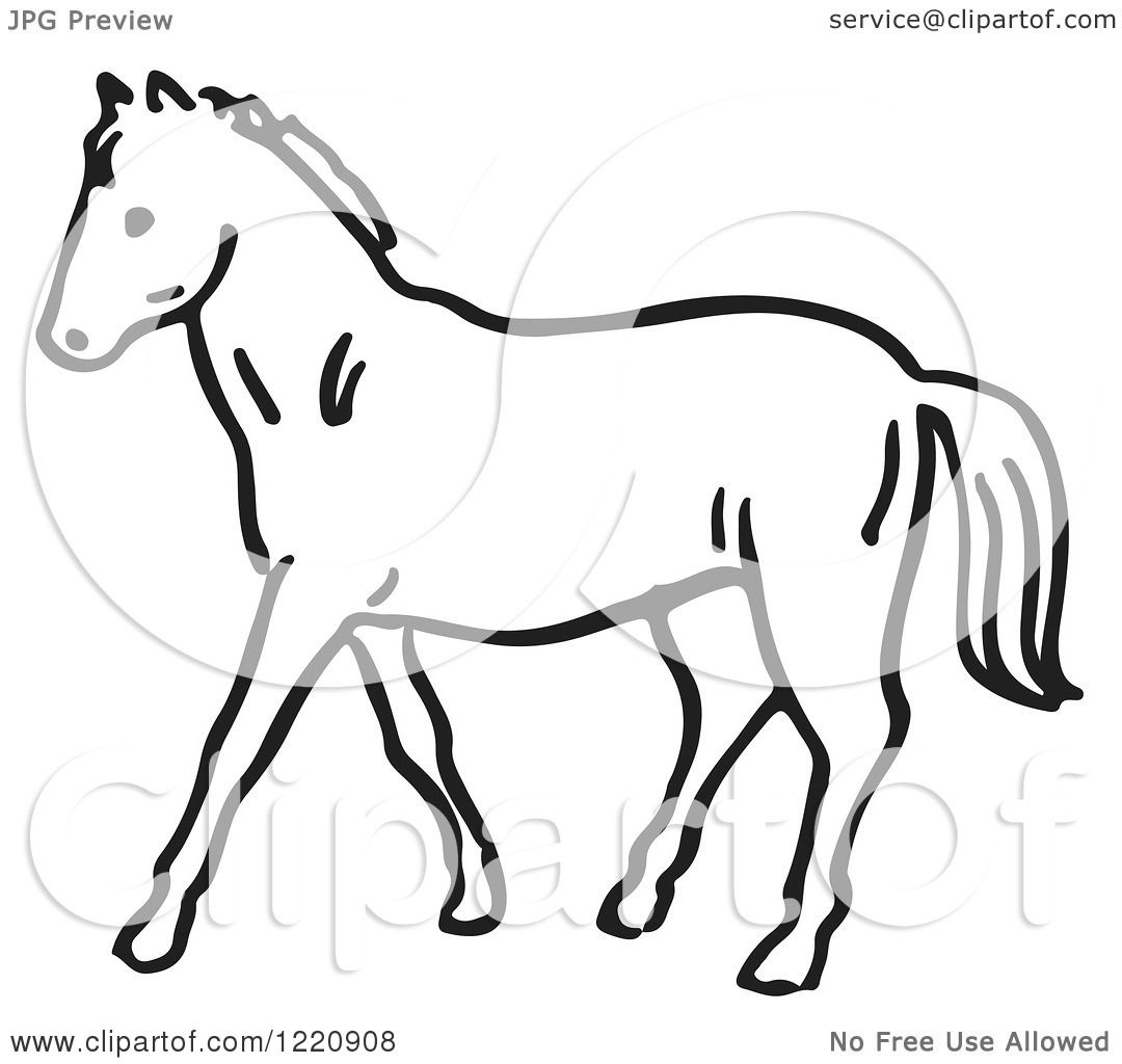 Clipart Of A Black And White Horse