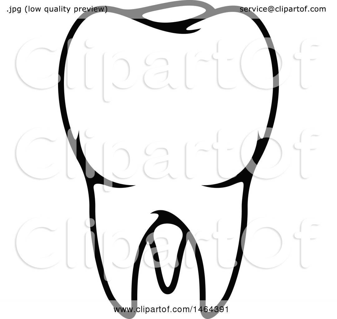 Human Tooth