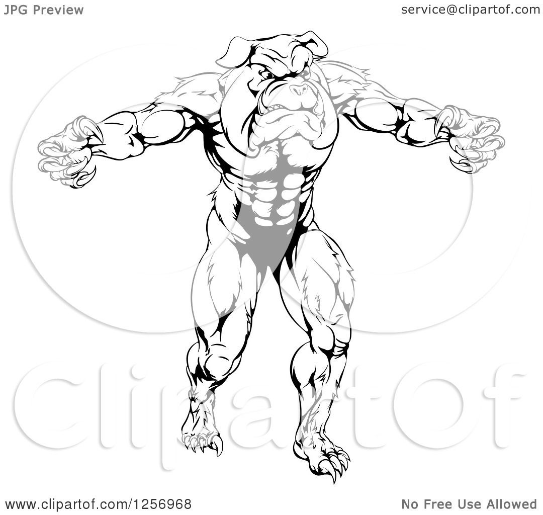 Clipart Of A Black And White Muscular Bulldog Man Mascot