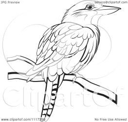kookaburra clipart bird illustration vector perched royalty perera lal