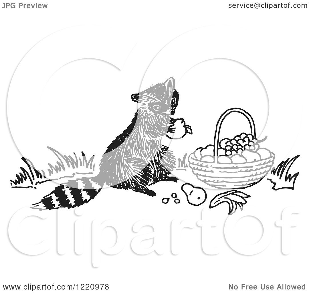 Clipart Of A Black And White Raccoon Eating Fruit From A Basket
