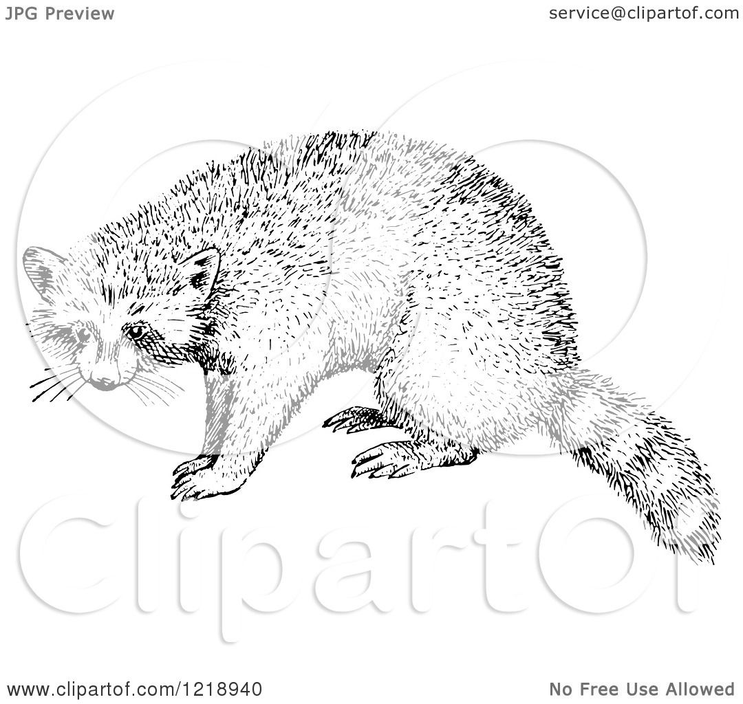 Clipart Of A Black And White Raccoon