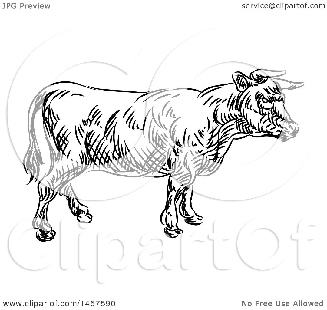 Clipart Of A Black And White Sketched Cow In Profile