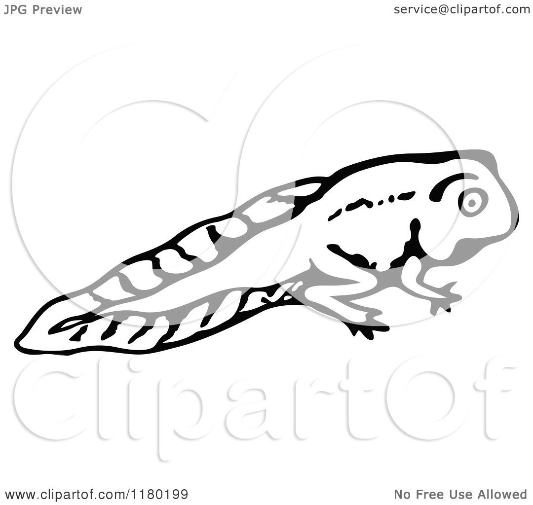 Clipart Of A Black And White Sketched Tadpole 2