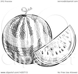 watermelon clipart vector illustration sketched royalty tradition sm
