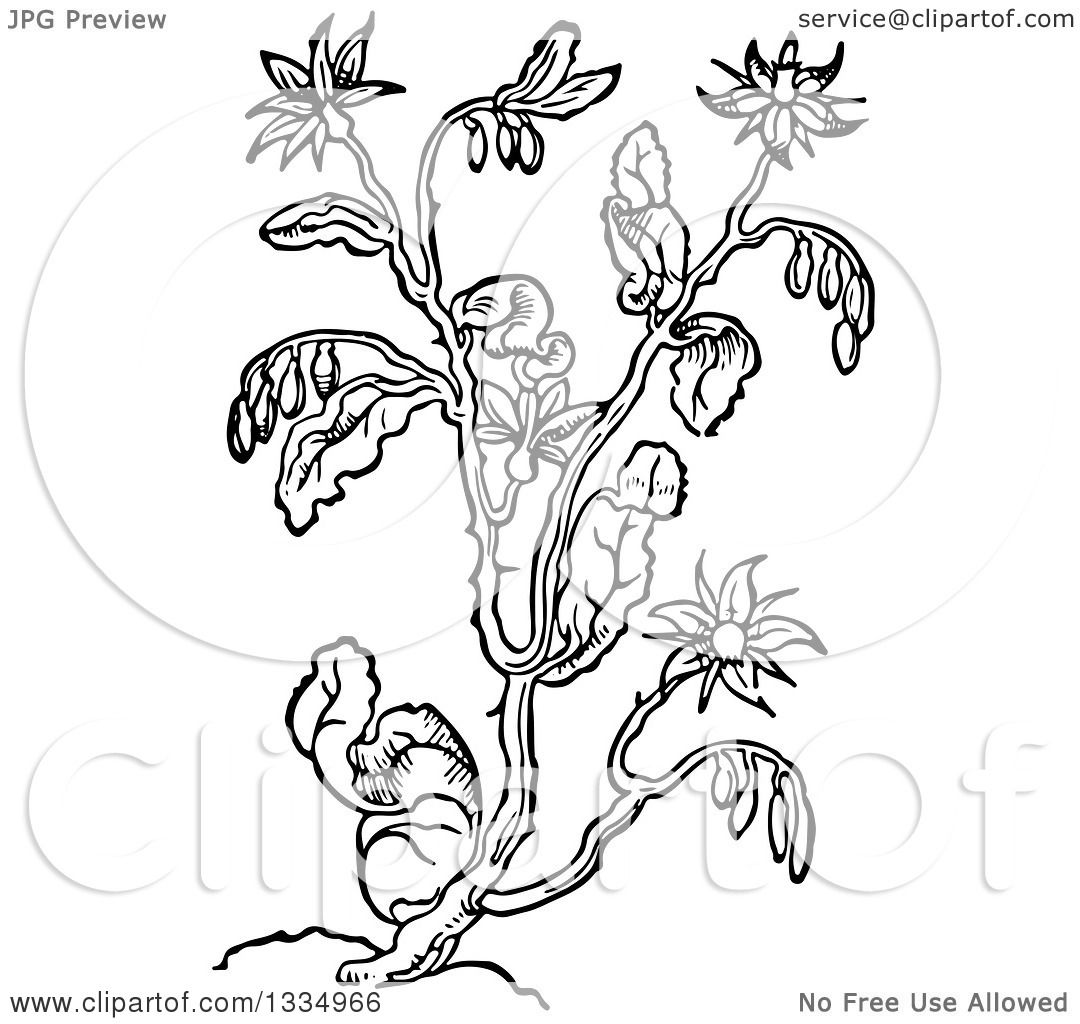 Clipart of a Black and White Woodcut Herbal Borage Plant