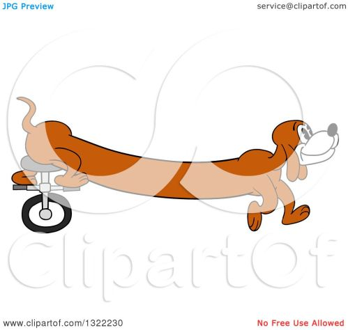 small resolution of clipart of a cartoon long weiner dog riding a unicycle with his hind legs royalty