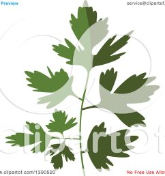 clipart of a culinary spice herb parsley royalty free vector illustration by vector tradition [ 1080 x 1024 Pixel ]