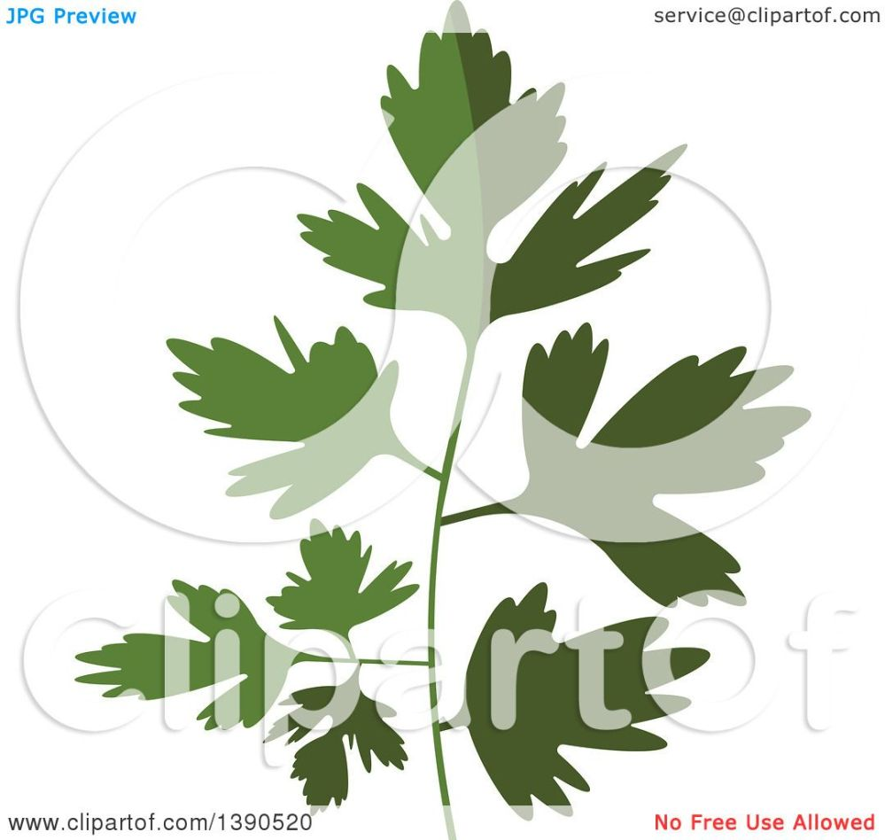 medium resolution of clipart of a culinary spice herb parsley royalty free vector illustration by vector tradition