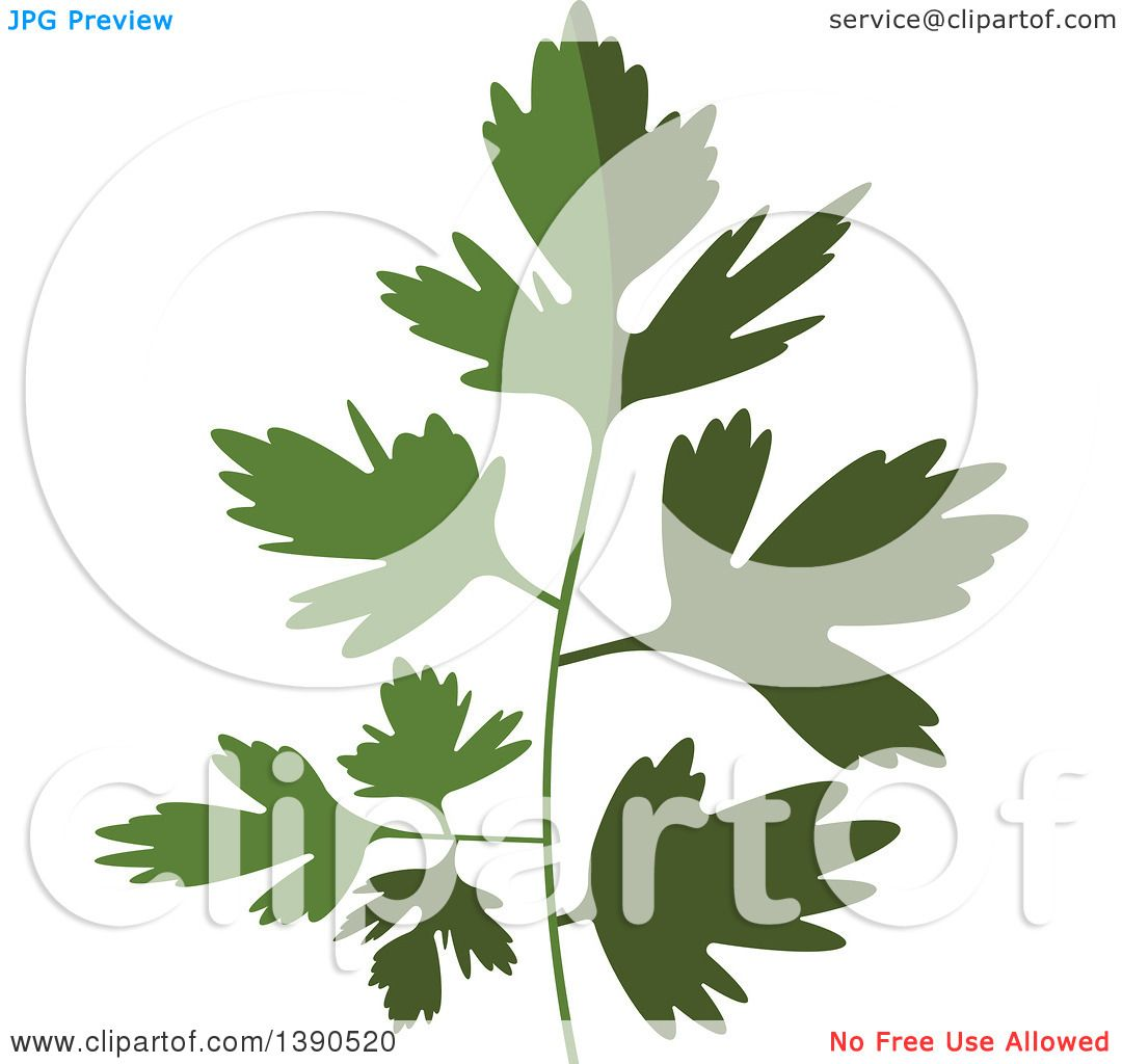 hight resolution of clipart of a culinary spice herb parsley royalty free vector illustration by vector tradition