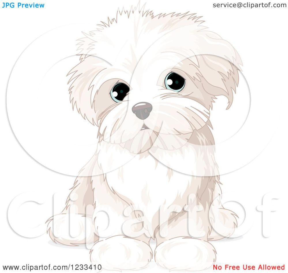 medium resolution of clipart of a cute bichon frise or maltese puppy dog sitting royalty free vector illustration