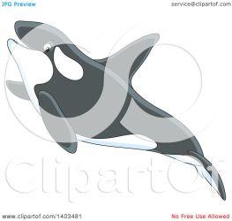 whale killer cute swimming illustration orca clipart royalty vector bannykh alex clip clipartof