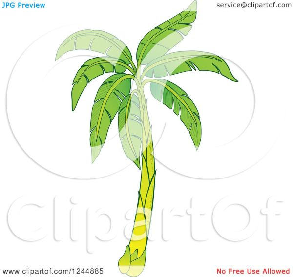 clipart of green banana tree