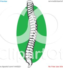 clipart of a human spine over a green circle royalty free vector illustration by vector [ 1080 x 1024 Pixel ]