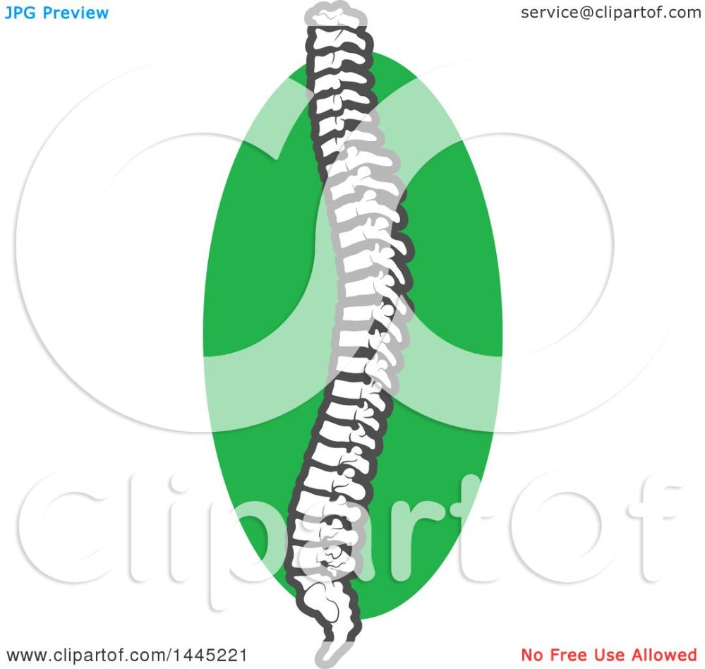medium resolution of clipart of a human spine over a green circle royalty free vector illustration by vector