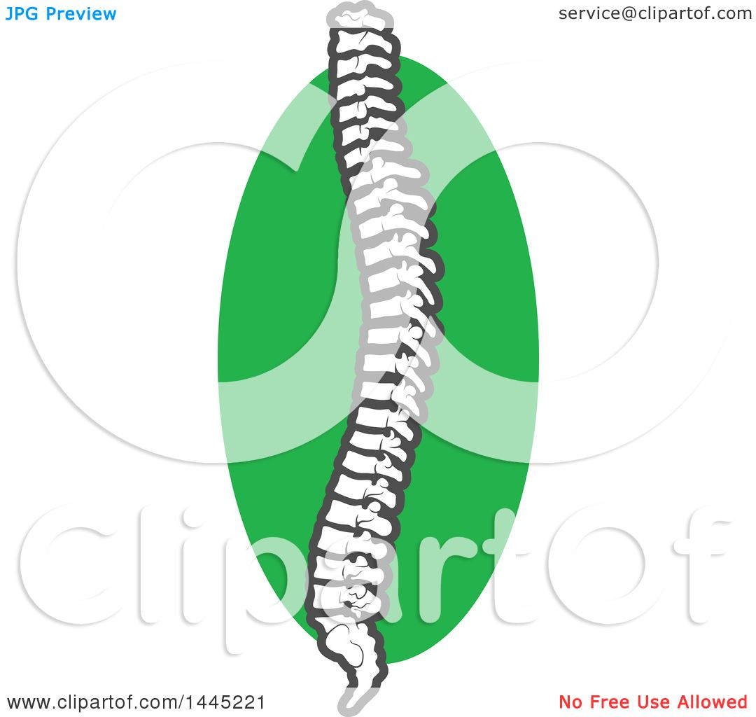 hight resolution of clipart of a human spine over a green circle royalty free vector illustration by vector