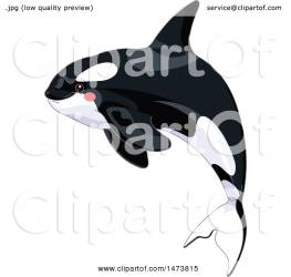 whale killer cute orca jumping illustration clipart royalty pushkin clip vector collc0093 protected