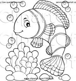clownfish  [ 1080 x 1024 Pixel ]