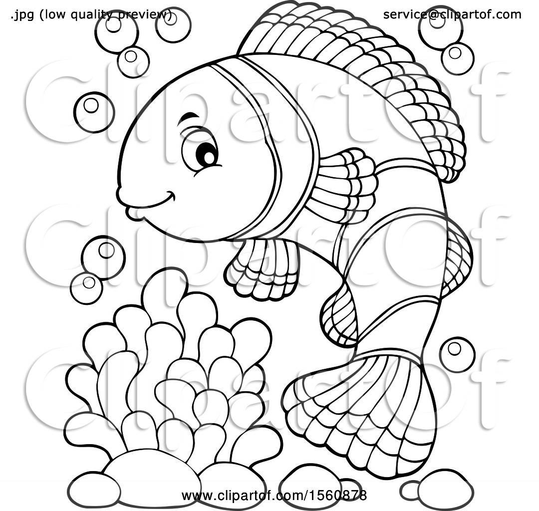 hight resolution of clownfish