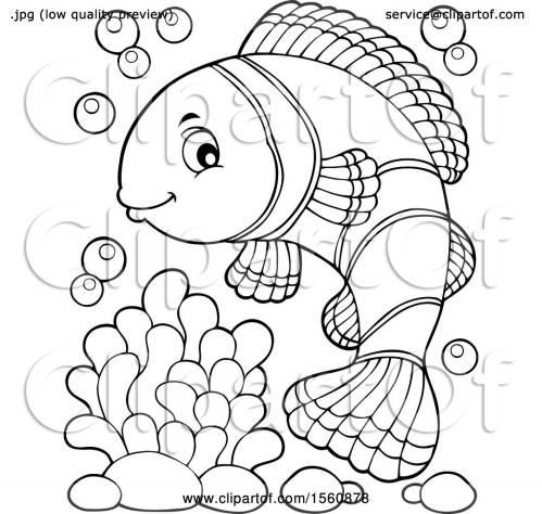 small resolution of clownfish
