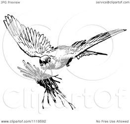 clipart bird illustration twigs royalty retro prawny vector