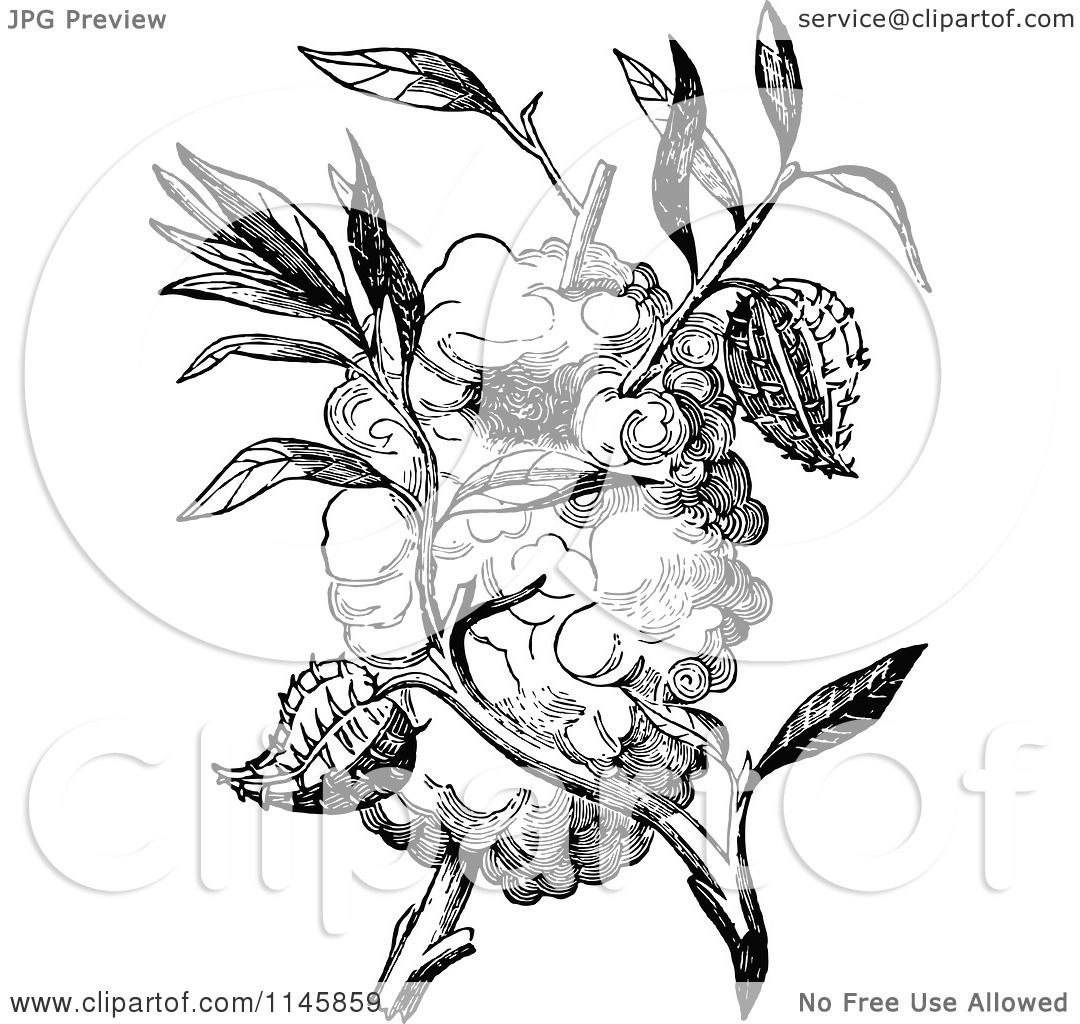 Clipart Of A Retro Vintage Black And White Capocier Bird