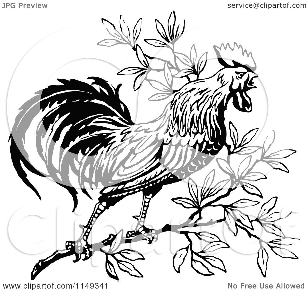 Clipart Of A Retro Vintage Black And White Crowing Rooster