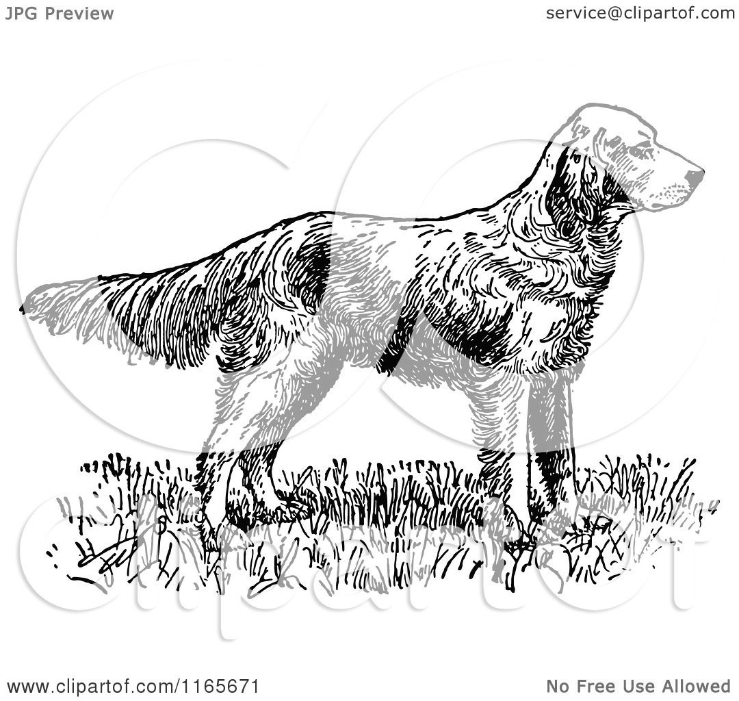 Clipart Of A Retro Vintage Black And White English Setter