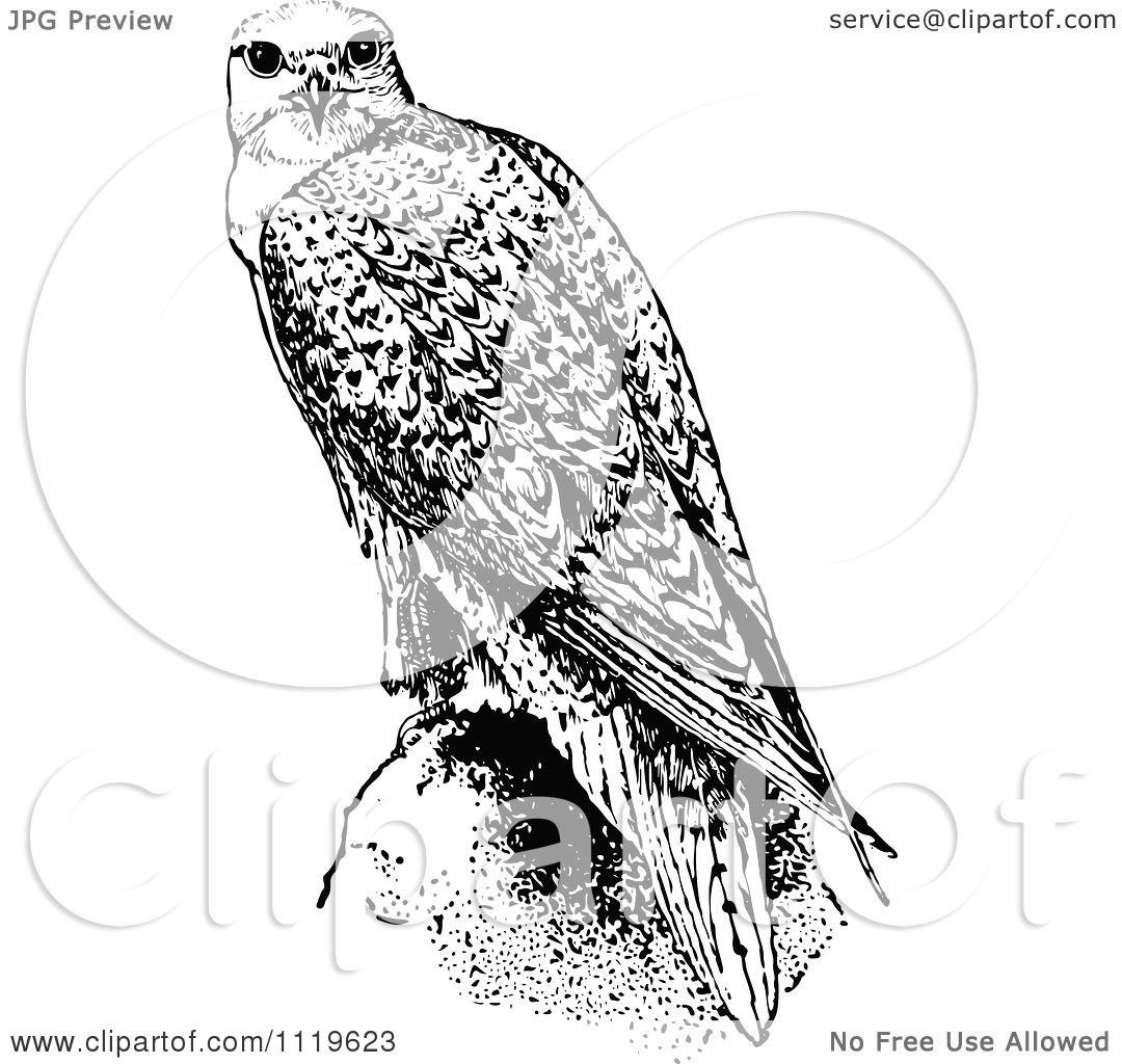Clipart Of A Retro Vintage Black And White Falcon Bird