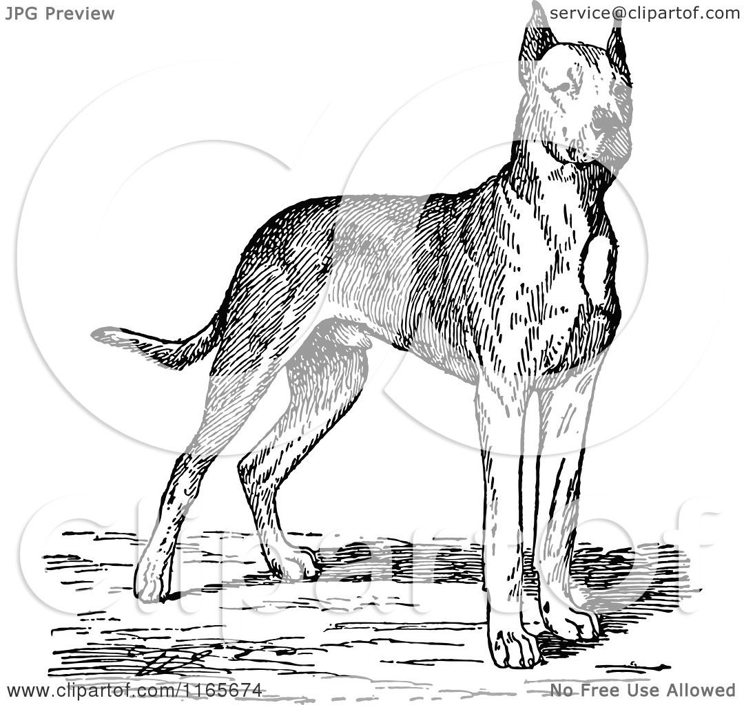 Clipart Of A Retro Vintage Black And White Great Dane Dog