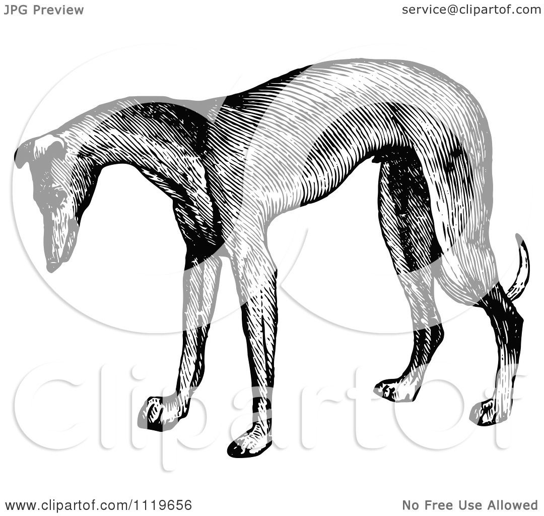 Clipart Of A Retro Vintage Black And White Greyhound Dog