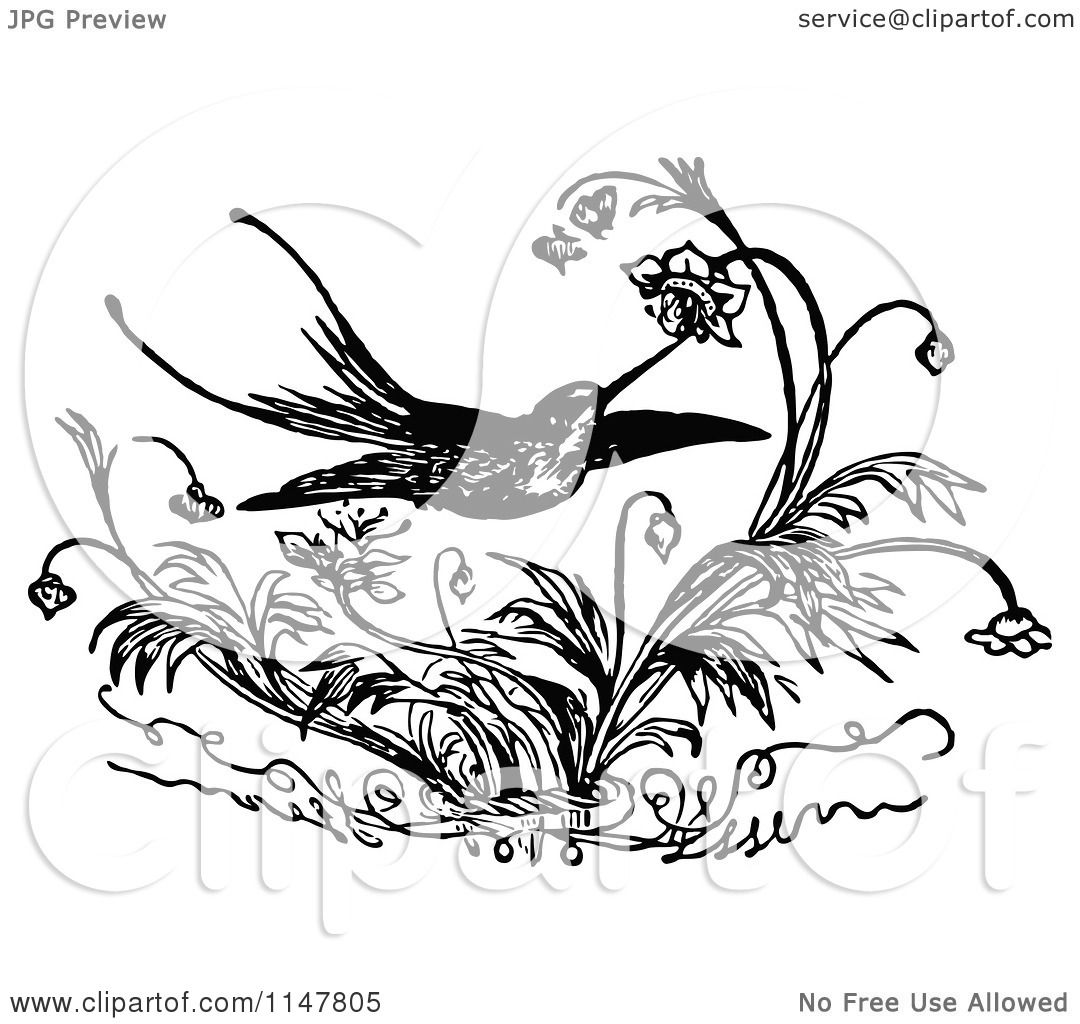 Clipart Of A Retro Vintage Black And White Hummingbird And