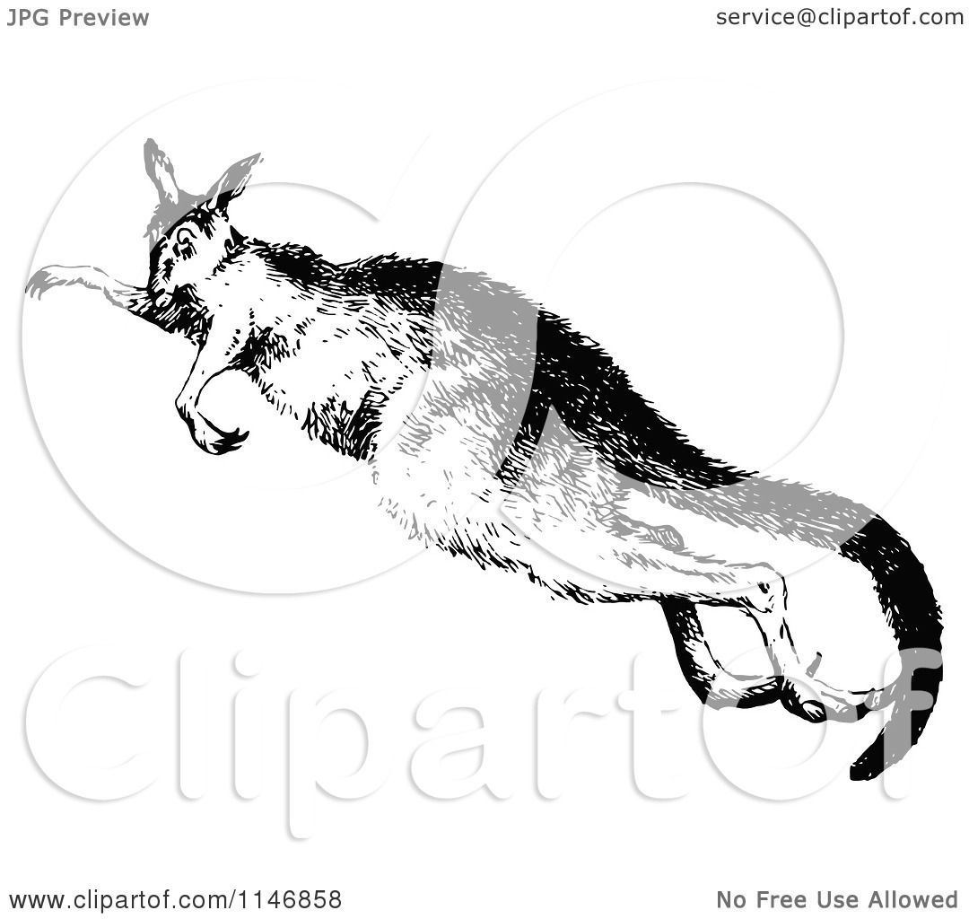 Clipart Of A Retro Vintage Black And White Kangaroo Jumping