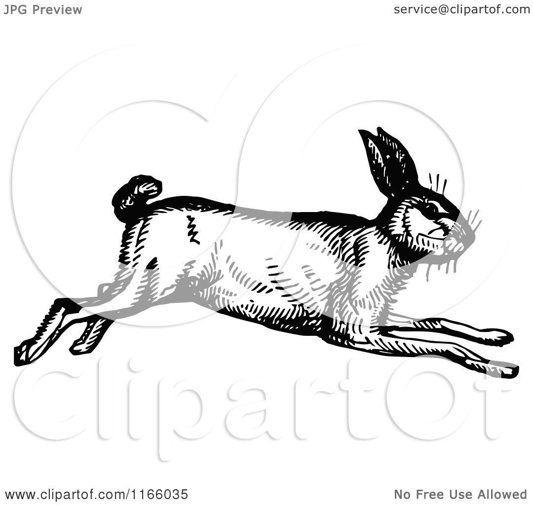 Clipart Bunny