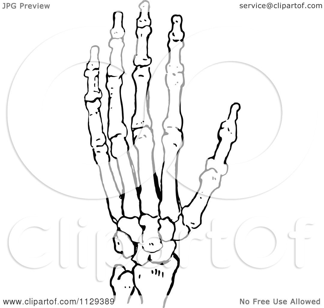Clipart Of A Retro Vintage Black And White Skeleton Hand