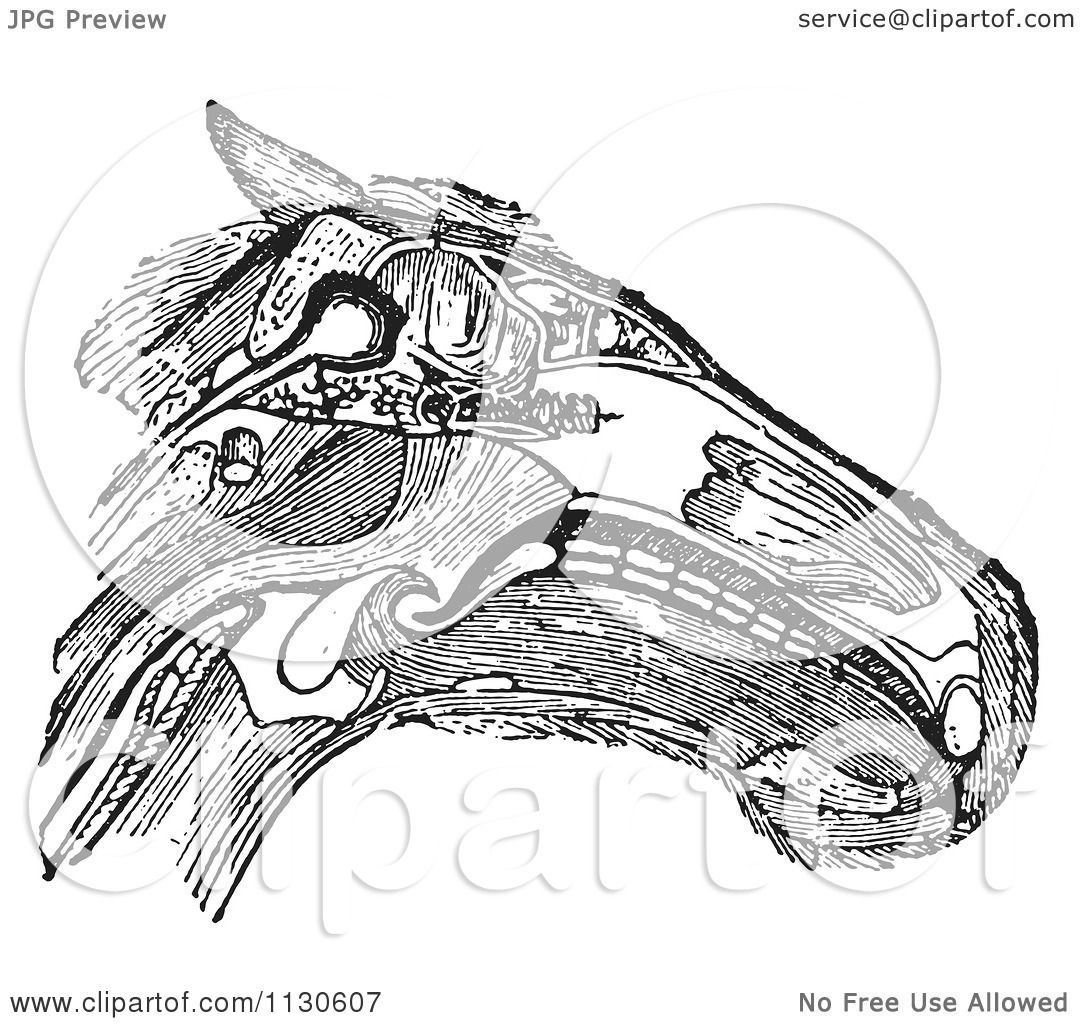 Clipart Of A Retro Vintage Diagram Of A Horse Head With