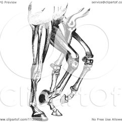 Horse Muscle And Bone Diagram Fischer Tropsch Process Flow Clipart Of A Retro Vintage Engraved Leg