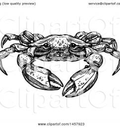 clipart of a sketched black and white crab royalty free vector illustration by vector tradition sm [ 1080 x 1024 Pixel ]