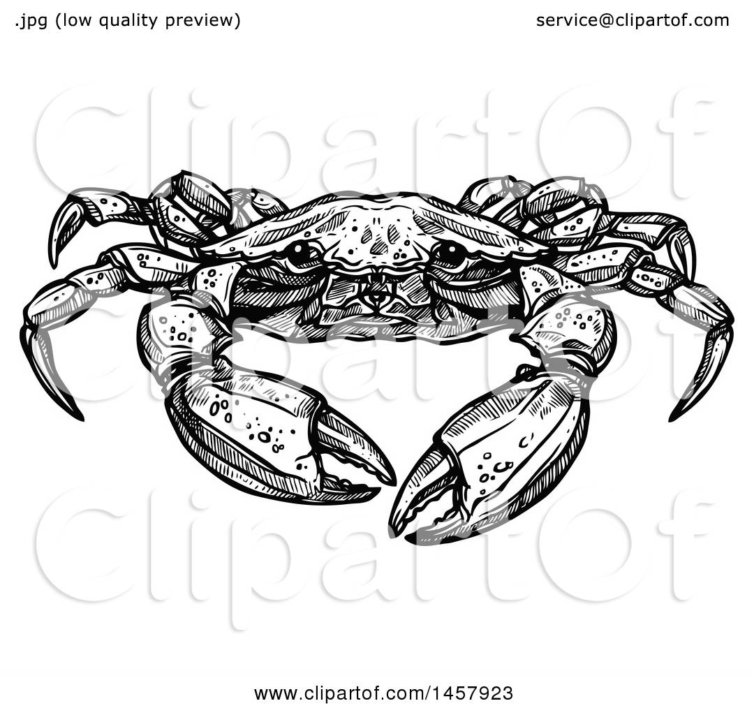 hight resolution of clipart of a sketched black and white crab royalty free vector illustration by vector tradition sm