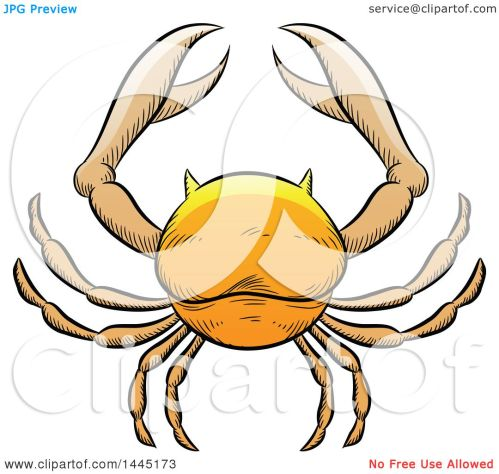 small resolution of clipart of a sketched golden yellow astrology zodiac cancer crab royalty free vector illustration by cidepix