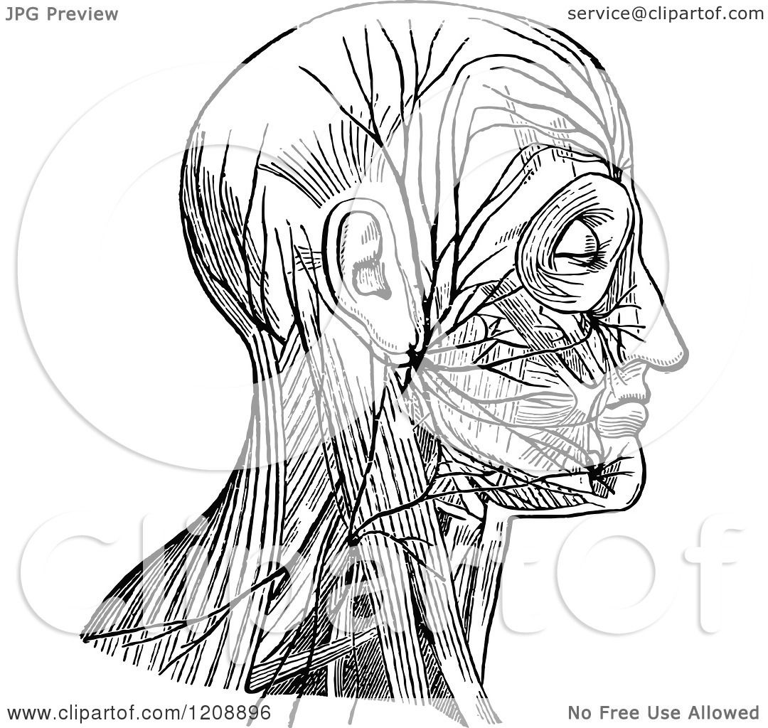 Clipart Of A Vintage Black And White Diagram Of Facial